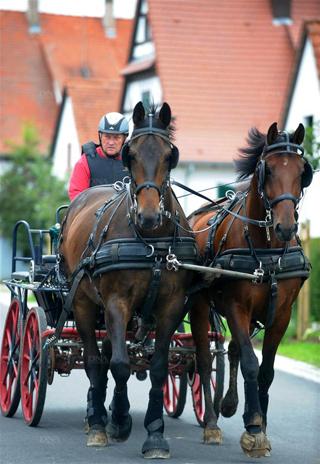 Daniel FISCHER - Vainqueur attelage à 2 chevaux